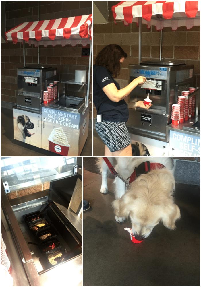 doggie-ice-cream-collage-i-love-my-disorganized-life