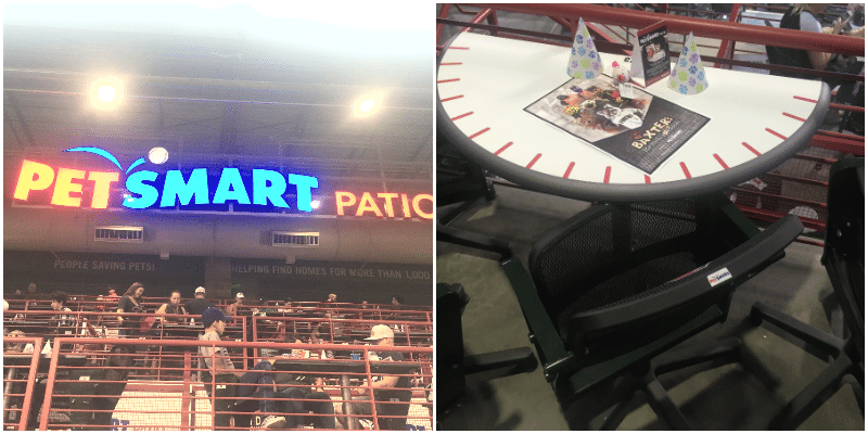 petsmart-patio-seating-i-love-my-disorganized-life