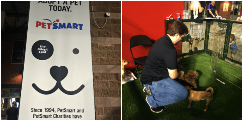 petsmart-adopt-spot