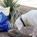 5 Ways to Treat Your Pets Like Family #BestofBLUE