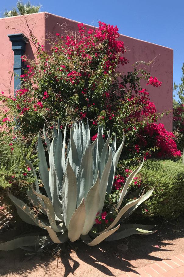 Arizona Inn Tucson desert landscape