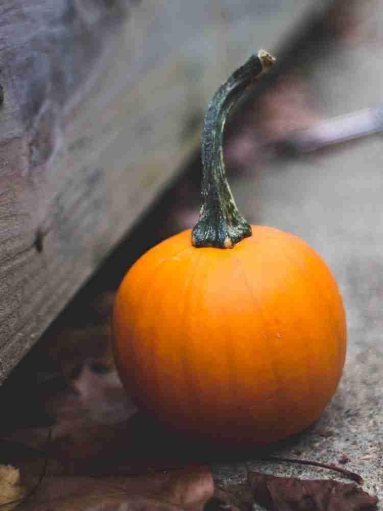 Round pumpkin on concrete